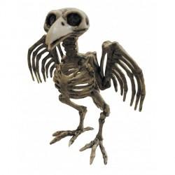 Squelette de Corbeau