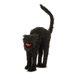 Chat Halloween sonore